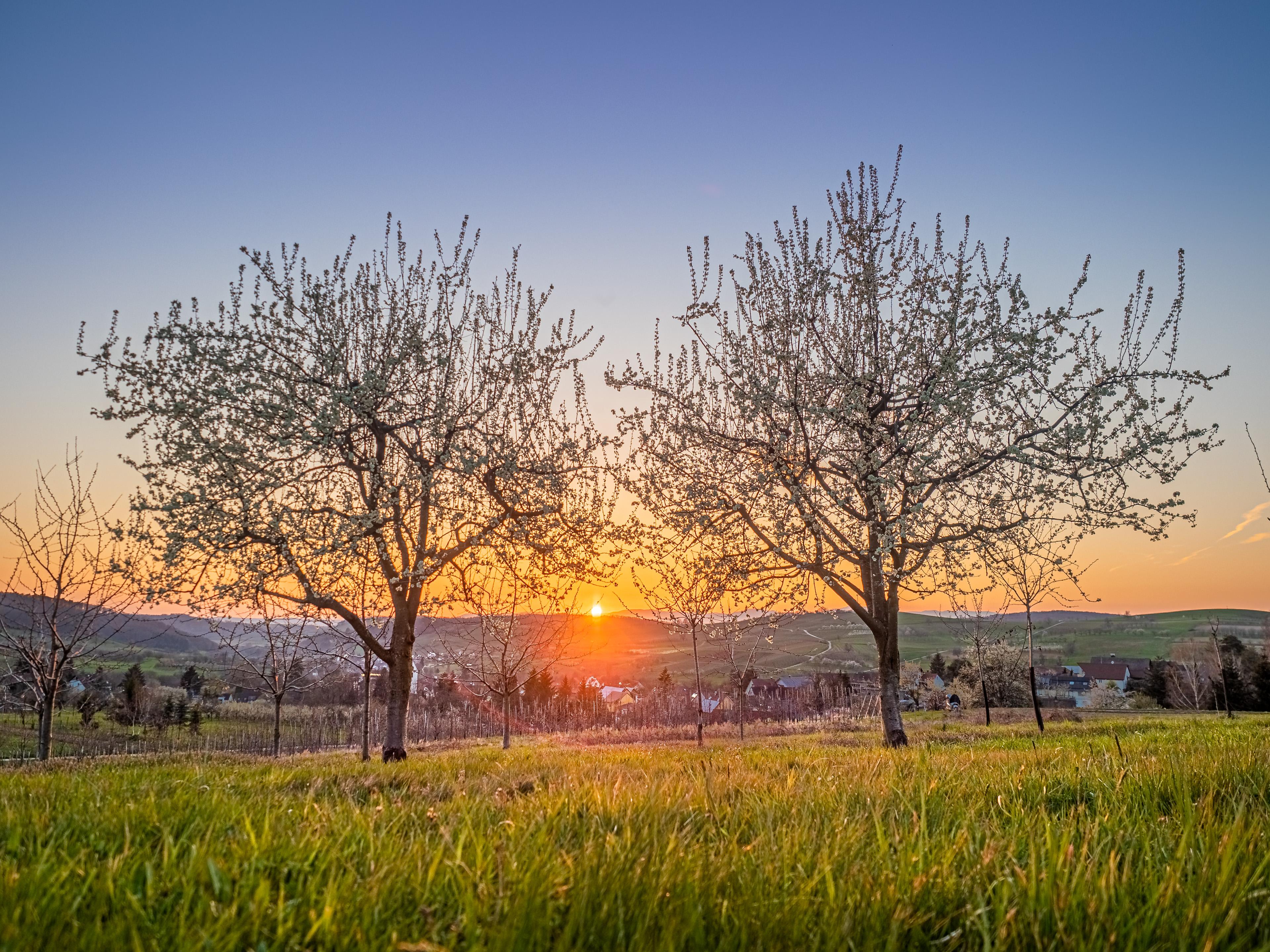 Sonnenuntergang in den Hügeln um Obereggenen