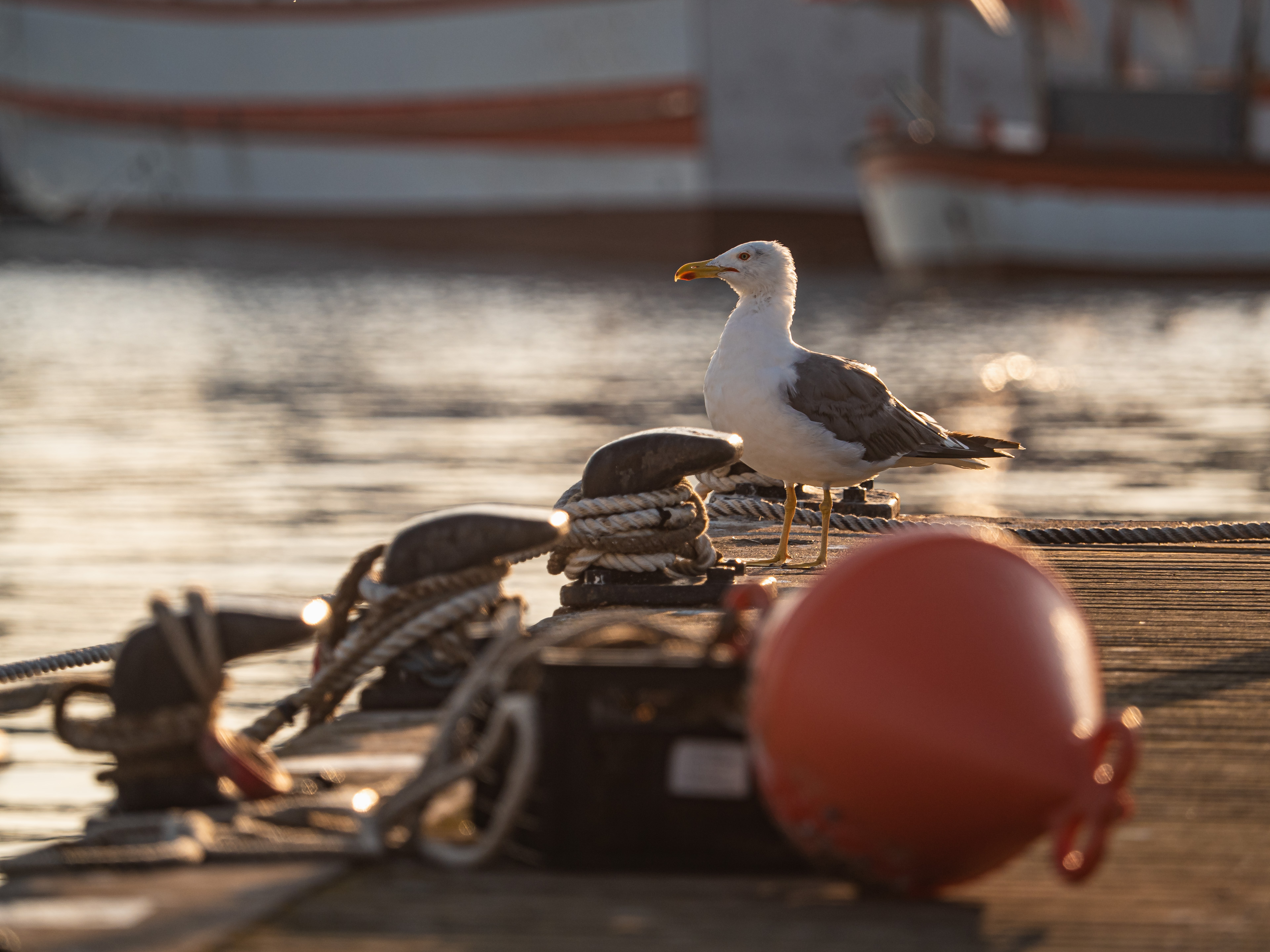 Möwe im Hafen beim Sonnenaufgang